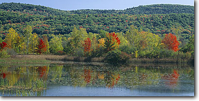 Stock photo. Caption: Marsh along the Connecticut River   near Bellows Falls Windham County Vermont,  New England -- united states america fall color colour colours colour northeast northern marshes lake lakes wetland wetlands panoramic panoramics panoramas panorama blue skies clear sunny hardwood forest autumn scenic scenics reflection reflections views