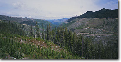 Stock photo. Caption: Clearcuts above Deer Creek Snoqualmie National Forest Cascade Range Washington -- clearcut logging destruction logged over devastation forests ranges pacific northwest northwestern united states america summer stump stumps harvest timber cascades roads industry industrial panoramic panoramics panoramas panorama human views road damage