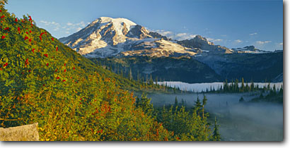 Stock photo. Caption: Mountain-ash and Mt. Rainier    from The Bench Mt. Rainier National Park Cascade Range, Washington -- panorama panoramas parks mountains mountain peaks volcano volcanos volcanoes ranges landscape landscapes tourist travel destination destinations fall autumn color color cascades scenic native sunny clear panoramic panoramics snow capped