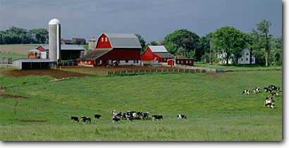 Stock photo. Caption: Dairy farm Arkansaw Pepin County Wisconsin -- barn barns farms dairies cow cows farming farmland summer cattle midwest midwestern family pastoral rural silo silos building buildings ranchland ranch ranches landscape landscapes livestock animal animals panorama panoramas panoramic panoramics