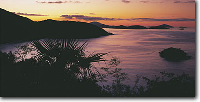 Stock photo. Caption: Teyer palm at sunset Cinnamon Bay Virgin Islands National Park St. John, U.S. Virgin Islands -- seascape seascapes united states sunets dawn caribbean tropical island  bays sunny warm away exotic romantic getaway vacation destination destinations poetic picturesque coastline dreamy dramatic panoramic panoramics panoramas panorama landscapes scenics