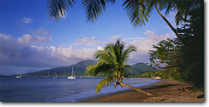 Stock photo. Caption: Coconut palms on Coconut Beach Prince Rupert Bay and Portsmouth Dominica Windward Islands,  Lesser Antilles -- sand sandy sunny calm tranquil boat  boats beaches aqua blue tropical destination destinations vacation vacations tourist travel exotic warm climate ocean peaceful safe peace romantic serene idyllic sailing sail panoramic panoramics panoramas scenics palm