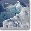 Stock photo. Caption: Adelie and iceberg Franklin Island Ross Sea Southern Ocean, Antarctica -- Keywords: