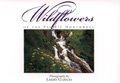 Wildflowers of the Pacific Northwest Postcard Book