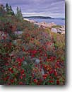 Stock photo. Caption: Granite ledges along Ocean Drive Acadia National Park Mount Desert Island Hancock County,  Maine -- united states america parks shoreline shorelines eastern east coast autumn fall atlantic seaboard seascape seascapes new england coast coastline coastlines islands