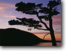 Stock photo. Caption: Pine silhouette  at sunset Somes Sound and Acadia Mountain Acadia National Park Mount Desert Island,  Maine -- united states america shoreline shorelines eastern east coast silhouettes tree trees parks atlantic seaboard seascape seascapes new england coast coastline coastlines islands pines