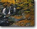 Stock photo. Caption: Trap Falls   and American beech trees Willard Brook State Forest Massachusetts -- park forests waterfall waterfalls creek creeks stream streams fall autumn northeast northeastern parks england united beeches hardwood northern america foliage color colors scenic scenics oranges orange sweet trust time wisdom refreshing fresh clean